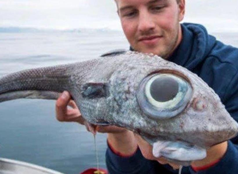 Istore Bikin Kaget Pemancing Berhasil Tangkap Ikan Bermata Besar