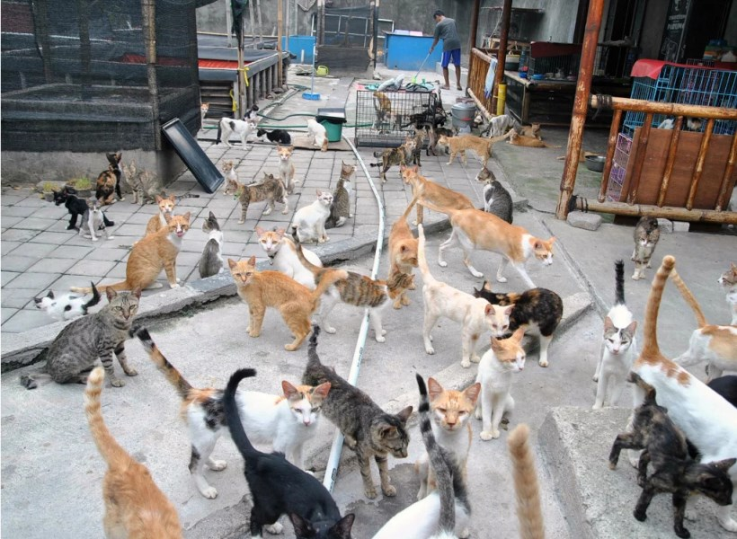 Kisah Mulia, Emak-emak Rawat 250 Kucing Telantar