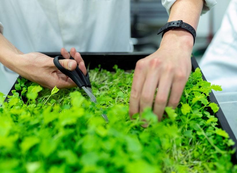Berikut Ini Tanaman Herba yang Wajib Ditanam di Rumah