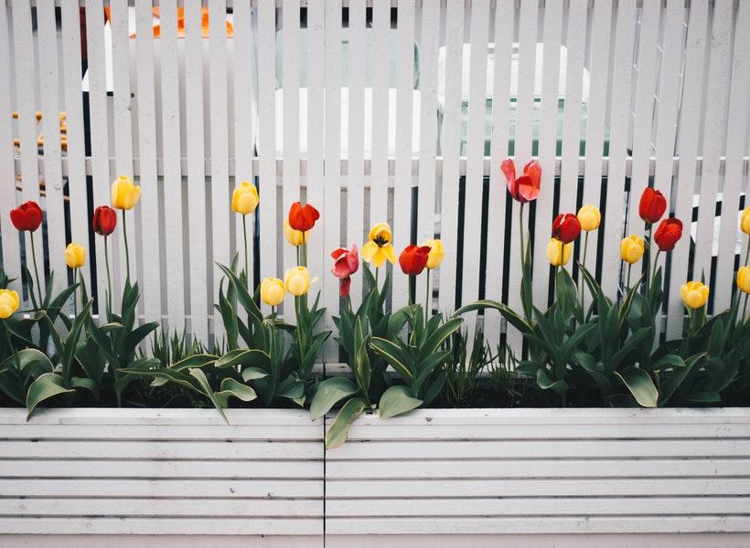 Rekomendasi Tanaman Pagar untuk Percantik Halaman Rumah
