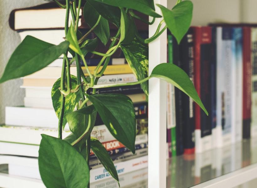 Rekomendasi Tanaman Antirewel yang Bisa Kamu Pilih