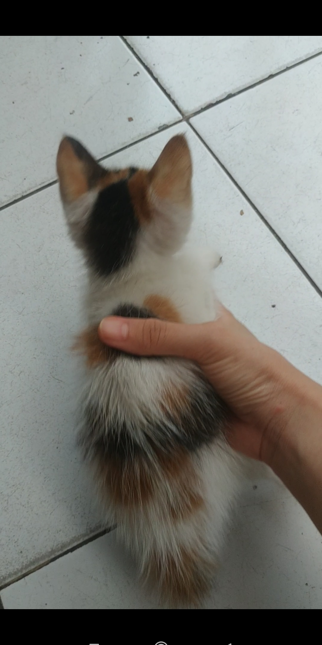 Mother of cat - [Vlog Cat]Ayo main kejar2an ~