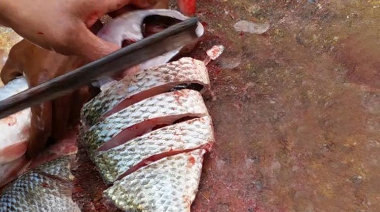 Kuliner Channel - Tips Metong Ikan Segar - Pasar Ikan Banglades