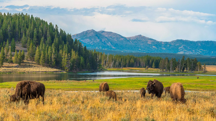 Traveling World - Yellowstone National Park Vacation Travel Guide