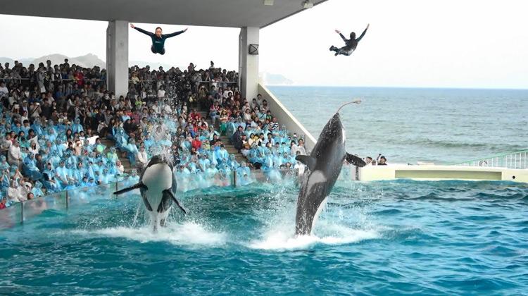 Show Moment - Pertunjukan Lumba - lumba di Kamogawa Sea World