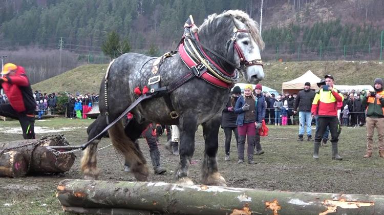 Show Moment - Kompetisi Tenaga Kuda