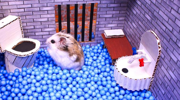 Show Moment - Hamster Lucu dan Menggemaskan