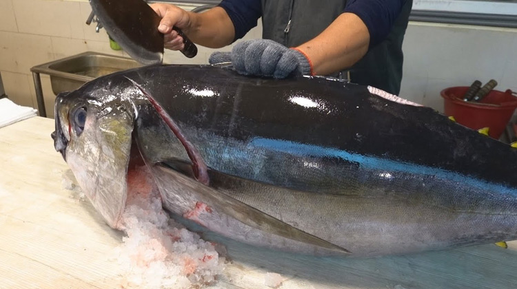 Kuliner Channel - Cara Memotong Bigeye Tuna untuk Sashimi