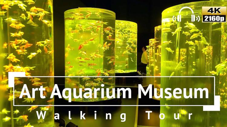 Traveling World - Art Aquarium Museum Walking Tour - Tokyo Jepang
