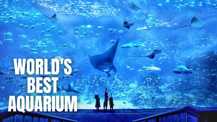 Traveling World - SEA Aquarium Singapore Walking Tour (2020)